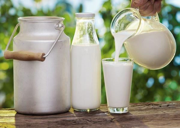 Cho ra đời nguồn sữa dồi dào thơm ngon và chất lượng nhất